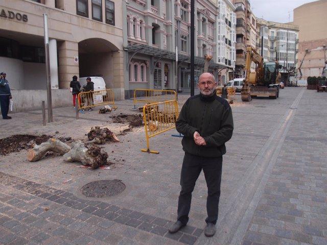 El concejal de Medio Ambiente Ruiz Tutor analiza arbolado Bretón