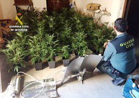 Sucesos.- Detenida una mujer por cultivar 50 plantas de marihuana en Moncofa