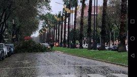 Las fuertes lluvias provocan la caída de varios árboles, uno de ellos en la Circular, y desprendimientos