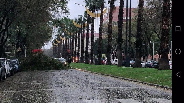 Caída de un árbol