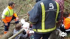 Un trabajador herido grave al caerle encima un árbol mientras cortaba madera en Cangas del Narcea