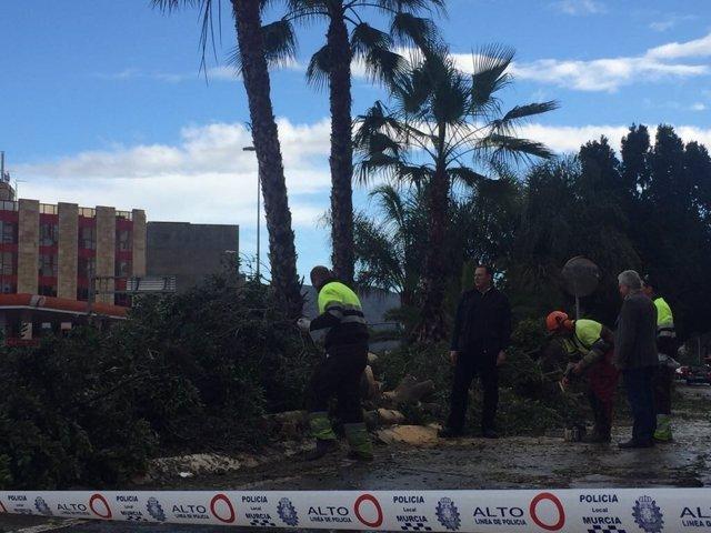 Guillén y los técnicos municipales supervisan árboles caídos por el viento