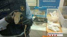 Hallan reptiles sin documentación al accidentarse un coche que llevaba ratas para alimentarlos