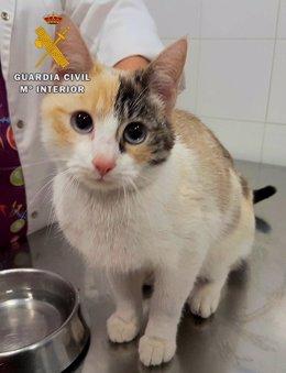 Gato que había sido abandonado por su dueña.