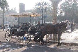 La Eurocámara pide medidas para mejorar el bienestar y protección de caballos
