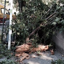 El Ayuntamiento lanzará un 'SELUR de los árboles' para resolver incidencias de las zonas verdes en un servicio 24 horas