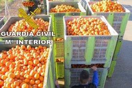 Detenidas 11 personas acusadas de robar más de 170.000 kilos de naranjas en Valencia