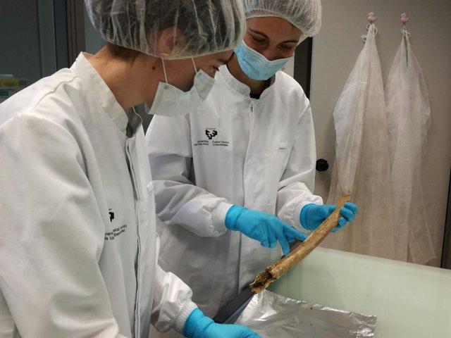 Las doctoras Baeta y Palencia trabajando con restos óseos de la fosa de Porreres