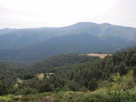 Fundación Artemisan denuncia el traslado de cabras hispánicas del Parque Nacional de Guadarrama a Francia