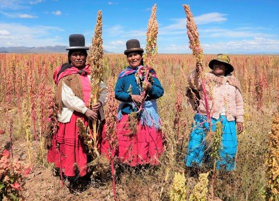 Mujeres recogiendo la quínoa