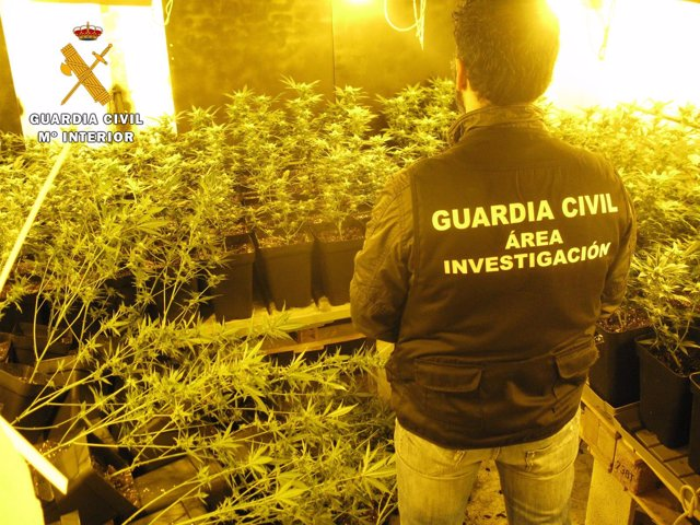 Marihuana intervenida por la Guardia Civil