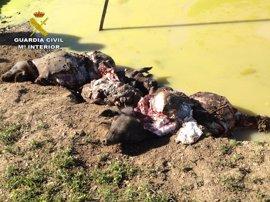 Cuatro personas investigadas en Sevilla por hurtar y matar a cerdos con una maza