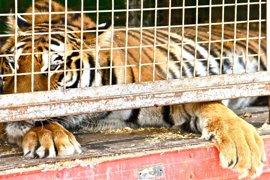 Un juez de Córdoba anula la prohibición de circos con animales y permite su instalación