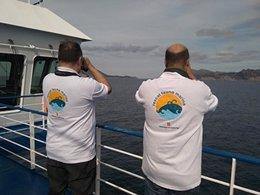 Técnicos avistan cetáceos en el Mediterráneo
