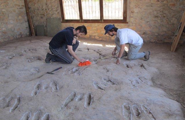 Los investigadores realizan trabajo de campo sobre las huellas.