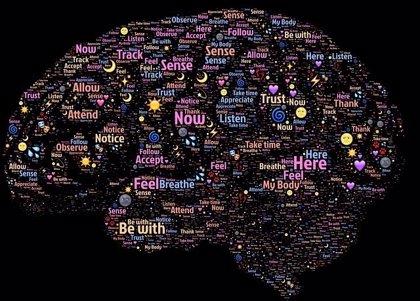 ¿Cómo fluye la información en el cerebro?