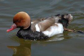 Más de un tercio de las áreas importantes para aves en España están amenazadas por las aguas residuales