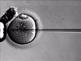 Un juez permite a una mujer quedarse embarazada 'in vitro' con esperma de su marido muerto