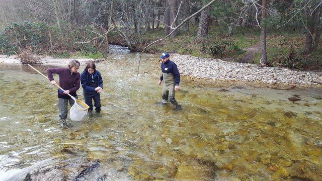 Valsaín (SG) Tejerina en el río Eresma