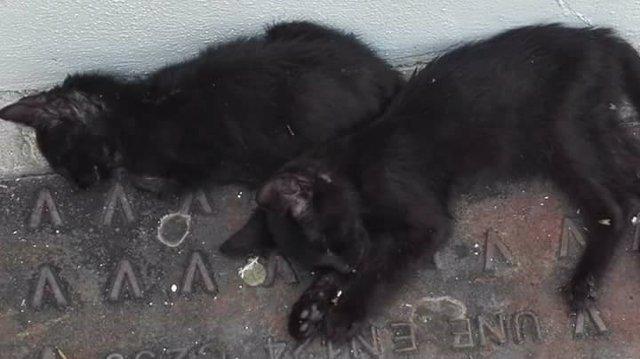 Gatos muertos en el entorno del Museo Taurino