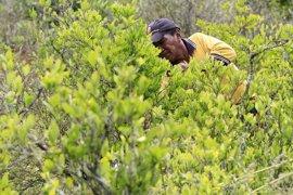El ministro de Defensa achaca el aumento de los cultivos de coca en Colombia al proceso de paz
