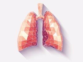 Hallan un nuevo cometido de los pulmones: fabricar sangre