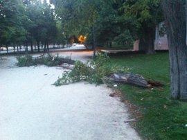 El Ayuntamiento indemnizará 710.000 euros por la muerte del hombre al que se le cayó una rama en El Retiro