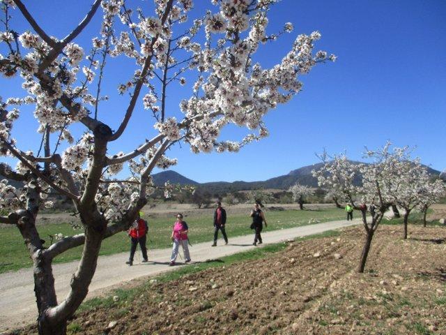 Almendros en flor han recibido a los senderistas en la ruta por Lúcar.