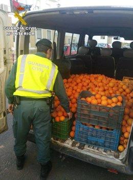Fruta incautada por la Guardia Civil.