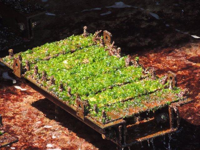 Contaminación biológica marina