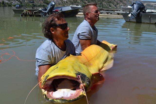 El ejemplar ha sido capturado en el río Segre