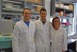Descubren una conexión entre dos enzimas y una proteína relacionada con el cáncer