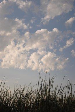 Nubes, nublado, atardecer, cielo cubierto