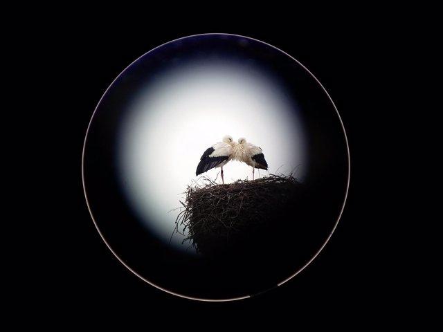 La cigüeña blanca