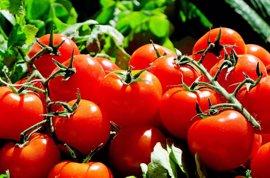 Demuestran los beneficios del tomate frente al cáncer según la variedad