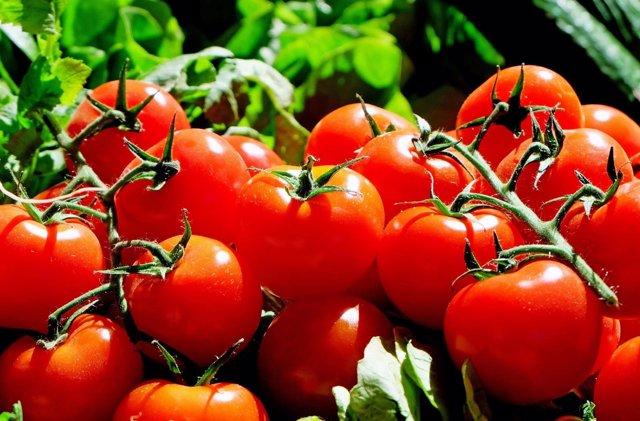 Demuestran que la actividad antitumoral del tomate está influida por la variedad