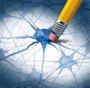 Foto: Nuevo objetivo para el tratamiento del Alzheimer