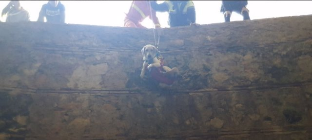 Rescate de uno de los perros