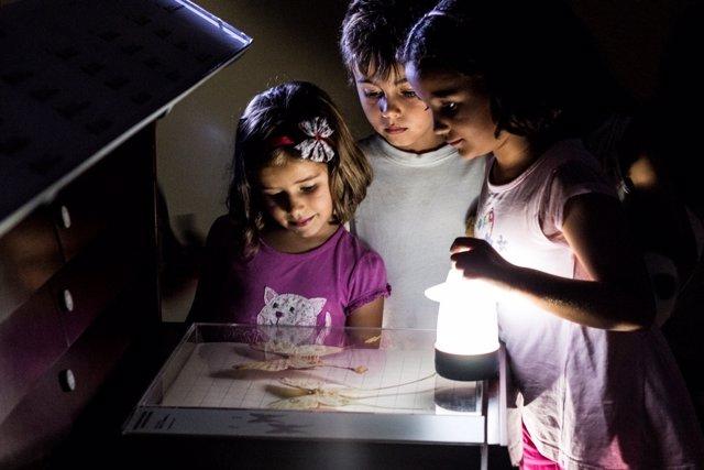 Actividad nocturna en el Museo de la Naturaleza y el Hombre