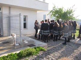 Un 55% de los animales del Centro Municipal de Acogida fueron adoptados o recuperados el año pasado
