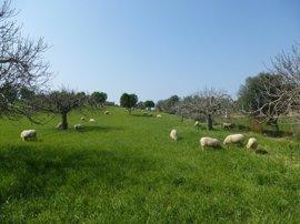 El GOB pide que la Ley Agraria garantice y proteja el suelo rústico para usos primarios