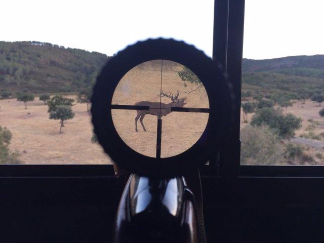 Venado en la mirilla de un arma, a punto de ser disparado