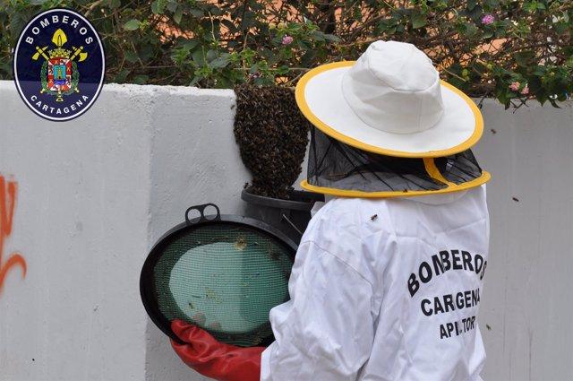 Retirada de enjambres de abejas