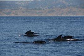 El Congreso da el visto bueno al proceso para proteger el Corredor de Cetáceos en el Mediterráneo