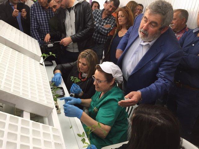 García visita la nave de injerto en la cooperativa de Las Virtudes de Conil
