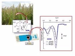 Grupo de investigadores UAM desarrolla nuevo método para detectar micotoxinas