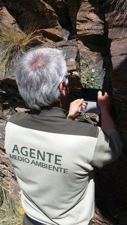 Un agente de Medio Ambiente documenta el hallazgo