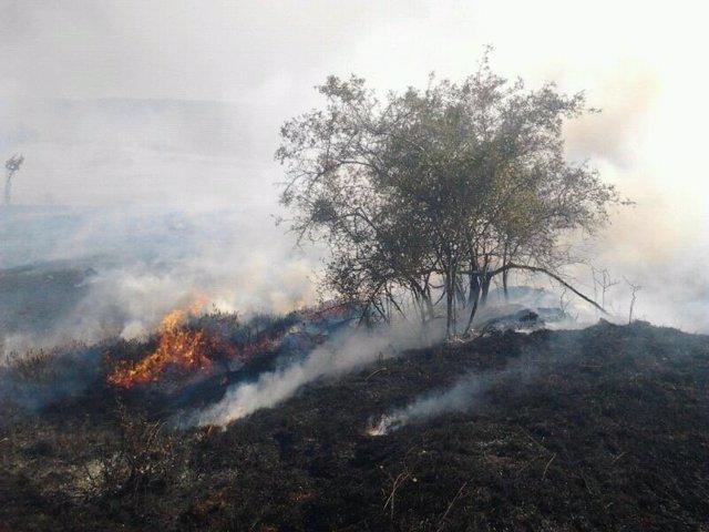 Incendio /(Archivo)