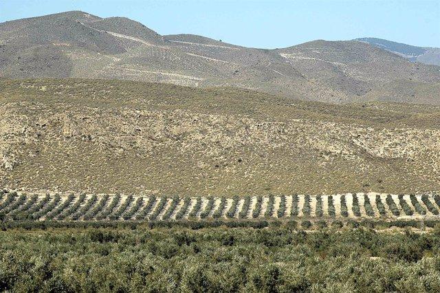 Campo, Cultivos, Montaña