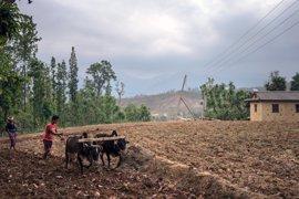 """La FAO advierte de que apoyar al sector agrícola en Siria sería """"clave"""" para reducir la necesidad de ayuda"""